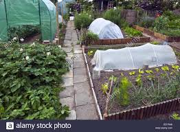 Green House Kitchen by Plastic Greenhouse And Herbs And Vegetables Growing In Kitchen