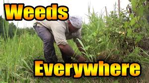 how to deal with overgrown weeds youtube