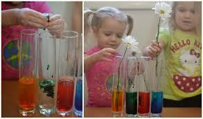 flower experiment for kids growing a jeweled rose