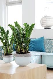 Indoor Plants Low Light by 18 Best Zamioculcas Images On Pinterest Indoor Plants