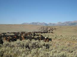 Accomplishments Antonym Cowboy Dictionary An Illustrated Index Desolate Ranch Wife