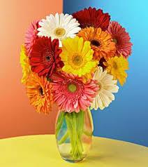 Gerbera Daisies Flowers Wmu Online