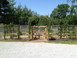 espaliered apple arch dirt simple