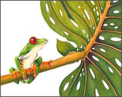 eyed tree frog the of lighthipe