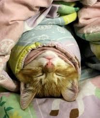 Bug Na Rug 17 Best Adorable Kitten Images On Pinterest Animals Adorable