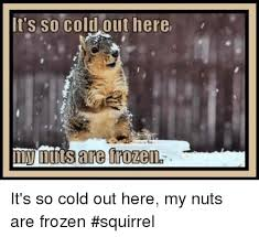 Squirrel Nuts Meme - it s so coldout here it s so cold out here my nuts are frozen