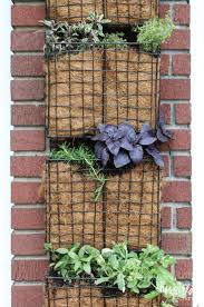 Herb Gardens by 50 Best Vegetable Gardening Images On Pinterest Gardening