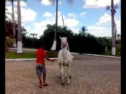 Extreme Remedio no cavalo por Marcelo Santos - YouTube &WD14