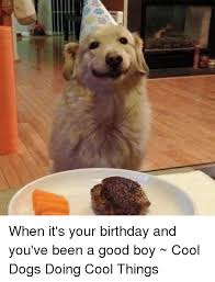 Birthday Dog Meme - when it s your birthday and you ve been a good boy cool dogs doing