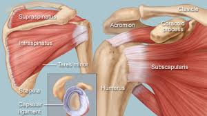 My Shoulder Hurts When I Bench Press Fix Shoulder Pain Proven Strength And Mobility Exercises Gmb