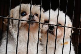 california first state to ban the sale of puppy mill dogs people com