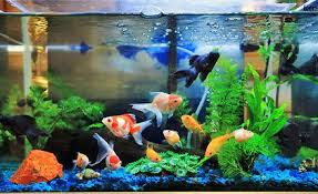india s ornamental fish tech park to come up in chennai in