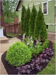 privacy trees charming backyard privacy trees 110 good backyard
