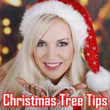 Christmas Tree Shopping Tips - christmas tree shopping tips android apps on google play
