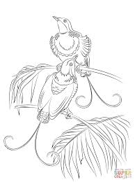 king of hollands bird of paradise coloring page free printable