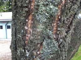 diagnosis how to remedy die of lower and middle branches on