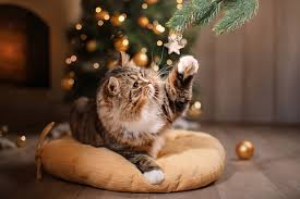 cat christmas cats and christmas trees 10 ways to maximize safety minimize