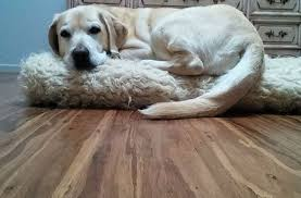 stunning bamboo flooring and dogs lovely best flooring with dogs