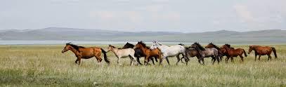 love road saving america u0027s horses