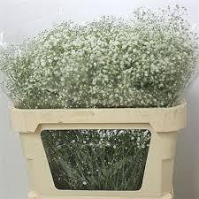 baby s breath wholesale gypsophila buy online wholesale flowers wedding flowers