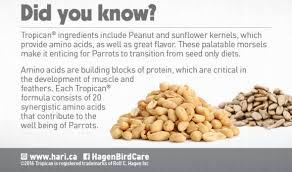 feeding peanuts to parrots hari