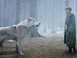 imagenes sorprendentes de lobos 15 curiosidades sorprendentes sobre los lobos de juego de tronos