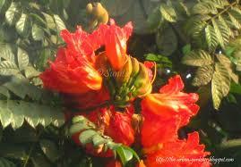 the urban gardener mumbai a time for blooming