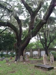 spooky cemetery trees arbor day foundation