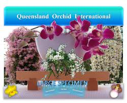 christian couture si鑒e social soundeagle ღஜஇ queensland orchid international