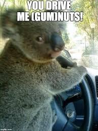 Angry Koala Meme - koala imgflip