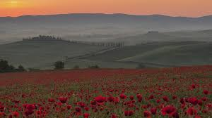 sunrise nature italy poppy crete tuscany wallpaper 1920x1080