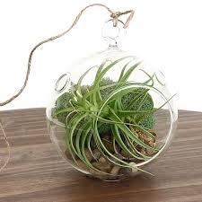 air plant terrarium kit