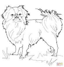 japanese chin coloring page free printable coloring pages