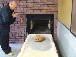 cat cremation buddhist funeral for our cat in tokyo in 2009 the rituals are