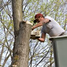 looking for tree removal prices we offer the best value in kent