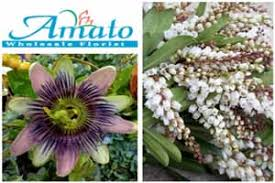 wholesale flowers denver resources flirty fleurs the florist inspiration for