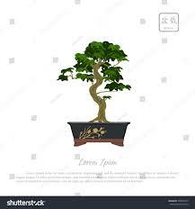 bonsai tree pot on white background stock vector 558993145