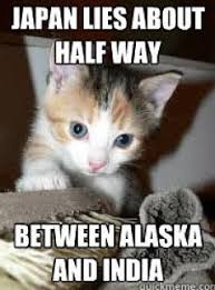 We Re Sorry Meme - we re sorry sarah palin adorable kitten memes for angry