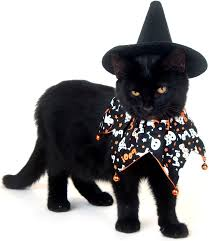Funny Halloween Costumes Cats 1221 Cats Awesome Images Animals Kitty