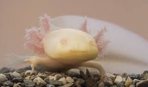 ten cutest underwater animals u2022 scuba diver life