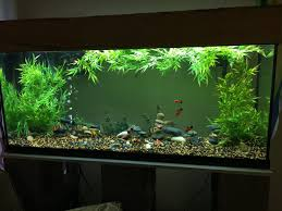 55 gallon aquarium light lighting for 55 gallon freshwater community tank and questions