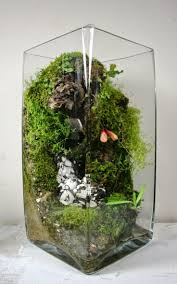 240 best terrarium images on pinterest gardening plants and