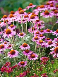 469 best plants and gardening images on pinterest vegetable