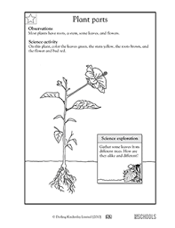 1st grade 2nd grade kindergarten science worksheets plant parts