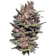 cannabis flower craft cannabis flower pre rolls concentrates blacksmith farms