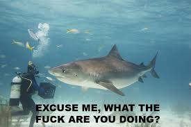 Scuba Meme - excuse me wtf r u doing shark excuse me wtf r u doin know your meme