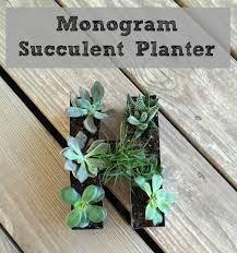 Succulents That Don T Need Light Monogram Succulent Garden Sometimes Homemade