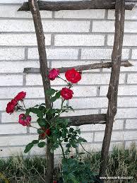 Rose Trellises Rustic Trellis Wenderfloniations