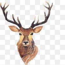deer head deer head png images vectors and psd files free download on pngtree