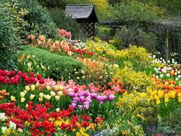 Flower Garden Hanoi by Dalat Flower Garden Explore Uminhnationalpark